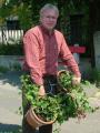 A virágos Hegyvidékért: muskátli az Apor Vilmos térre. 2008. május 14.