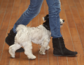 Kutyapiszokgyűjtő sajtótájékoztató
